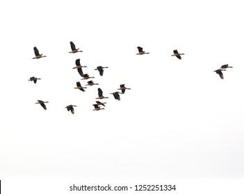 The birds flying.