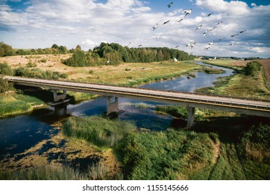 Birds flying above the bridge. Aerial photo.