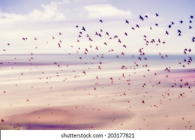 birds flying and abstract sky ,spring background abstract happy background,freedom birds concept,symbol of liberty and freedom