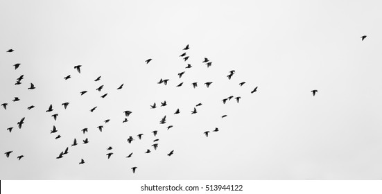 birds flying black and white photography