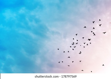 Birds flying in the blue sky .