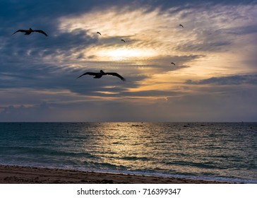 birds flying and fishing boats seen from the beach shore on a hot summer morning