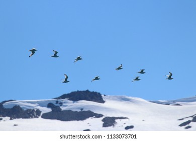 Birds flying in formation over a glacier in Alaska