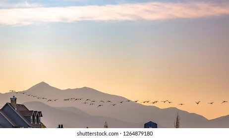 Birds flying in the glowing sky in Daybreak Utah