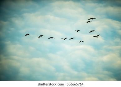 Birds flying high in blue cloud sky