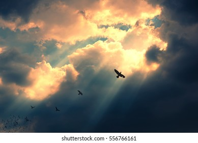 Birds flying to the light. Successful concept. Leadership and fellowship concept.