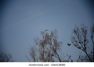 Birds flying near trees