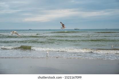 Birds flying over Dutch Wadden Sea coastline