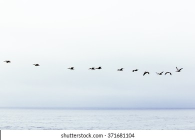 birds flying over the ocean with foggy sky in winter