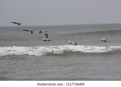 Birds flying in over ocean waves
