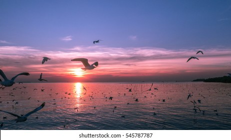 Birds are flying over the river at sunset
