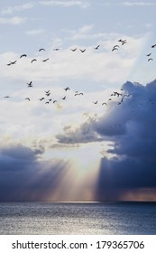 birds flying over the sunset on the sea,romantic and art deco landscape