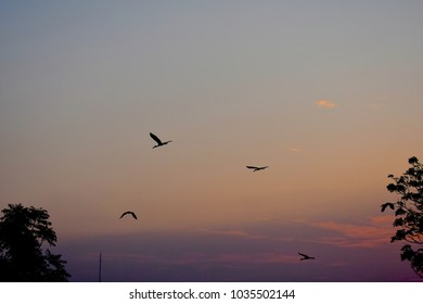 birds flying over a tree in morning sky as background
