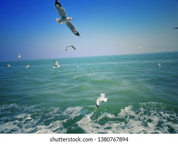 Birds flying  at Saint Martin's Island.The Saint Martin's Island, locally known as Narkel Jinjira, is the only coral island and one of the most famous tourist spots of Bangladesh
