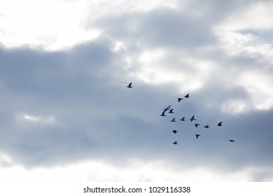 Birds flying and sky