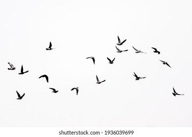 Birds flying in the sky.