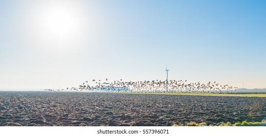 Birds flying in sunlight in winter