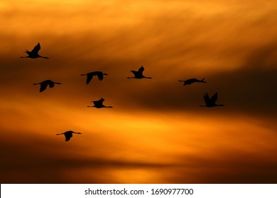 Birds flying in the sunset