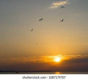 Birds flying at the sunset in Zadar, Croatia