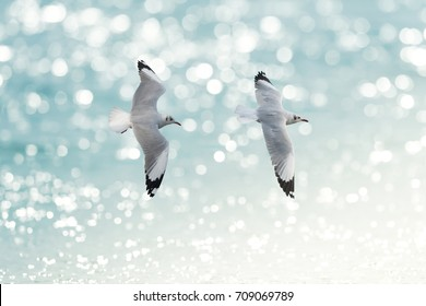 Birds flying together.Two Birds Brown-headed gull  (Chroicocephalus brunnicephalus) flying together above the sea water background. Follow me.