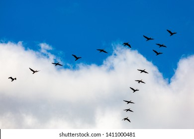 Birds flying in a V formation over the ocean