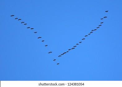 Birds flying in V-formation