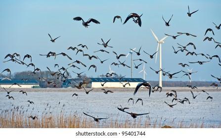 Birds flying in winter over a field