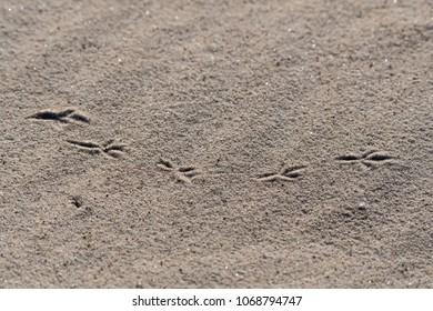 Birds footprints in the sand on a beach