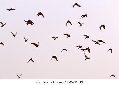 Birds freely flying in the open sky.