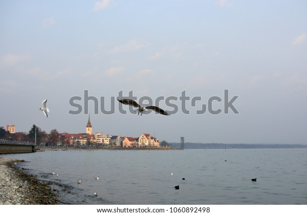 Birds in front of the cityscape of Friedrichshafen