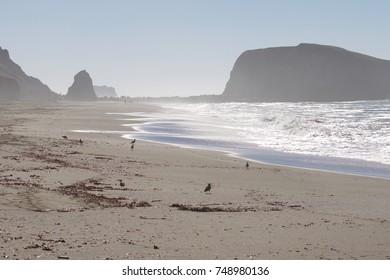 Birds Goat Rock Beach, California - Pelican, Oystercatcherr, Seagull.