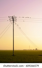 birds hang onto electricity power lines over the paddy field at sunrise.
