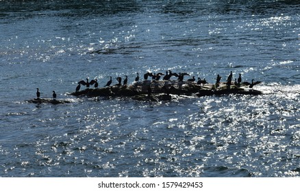 Birds hanging out on a small rock in the water