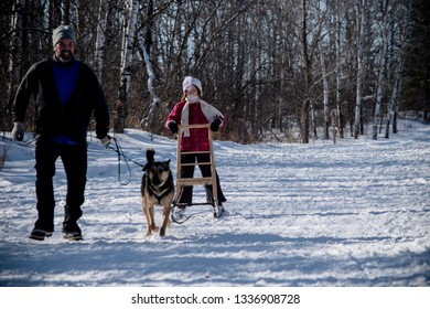 Birds hill MB - Canada / february 25 2018 - kids and a dog handler are practicing skijoring, a type of dog sledding, in birds hill park, birds hill Manitoba Canada.