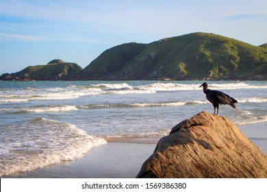 Birds in Honey Island, Brazil