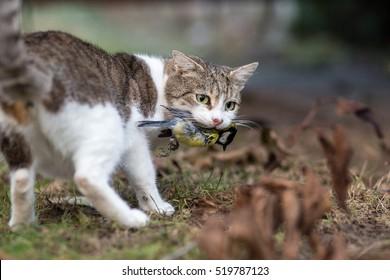 Birds hunter cat