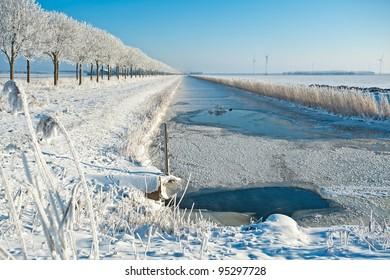 Birds in an ice hole in winter