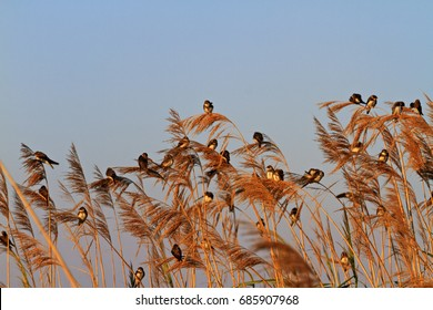 birds are illuminated by the sun in the summer morning,wildlife