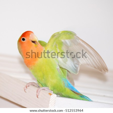 Birds Inseparable