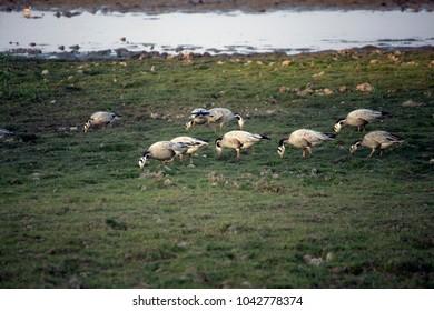 Birds of Kaziranga