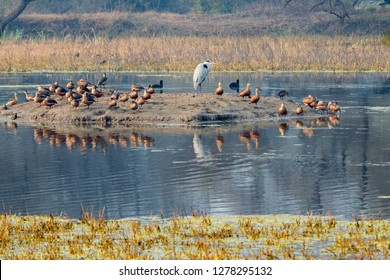 Birds. Keoladeo Ghana National Park. Unesco biosphere reserve. Rajasthan. India.