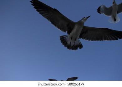 birds miami beach
