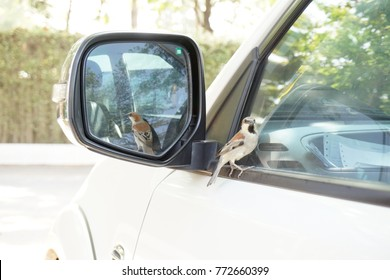 Birds in the mirror for cars