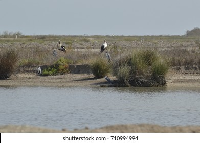 birds and nature in the marshes of the guadalquivir