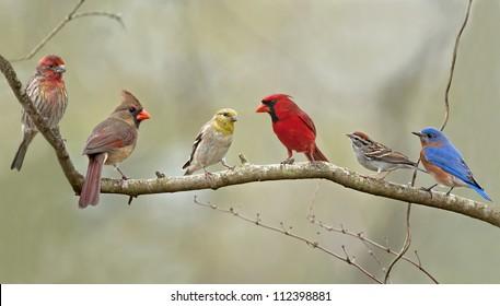 Birds of the Neighborhood