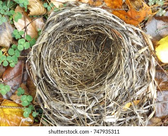 Bird's nest, Adirondacks, New York State