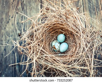 Bird's nest with blue eggs on a wooden background, copy space.selective focus and toned image