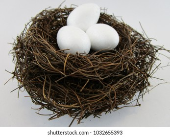 Birds nest containing 3 eggs with white background