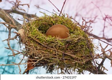 bird's nest with egg