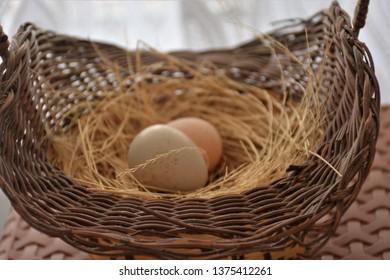 birds nest eggs and incubates